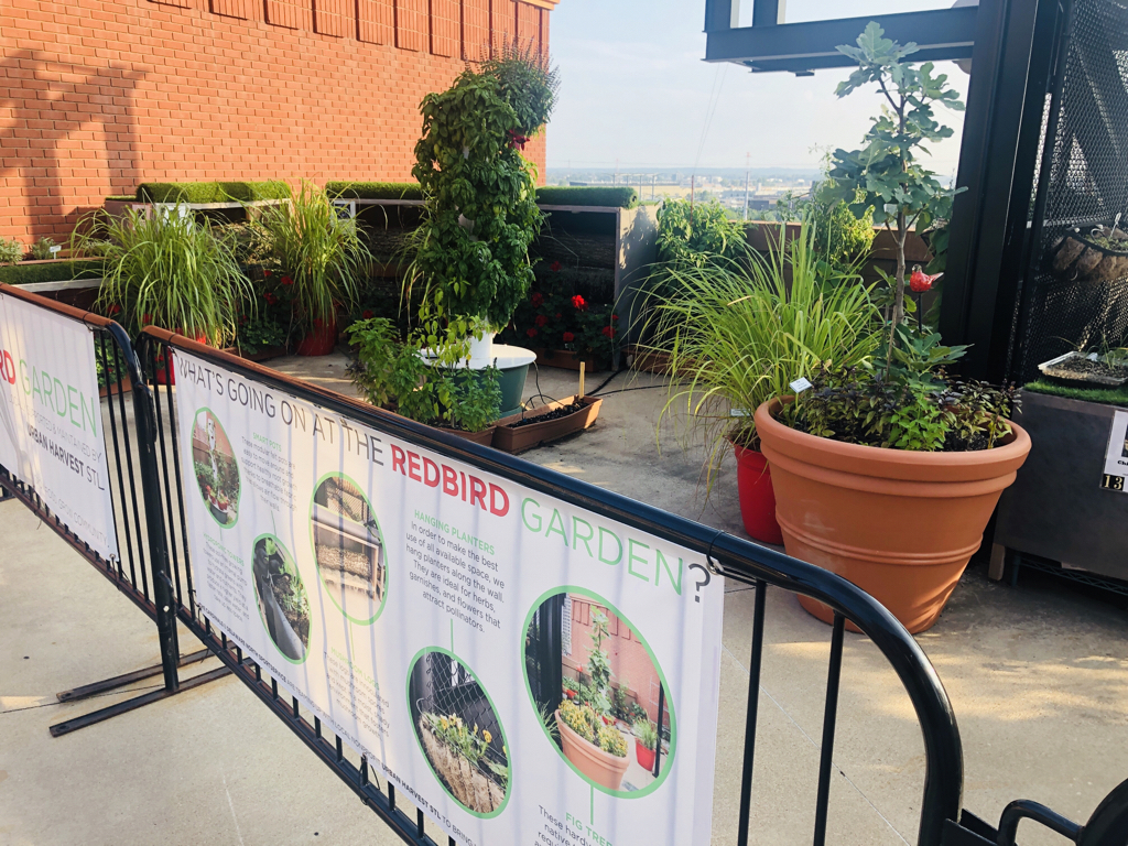 Not the usual ballpark sight: The Cardinals have a garden going on the perimeter of the upper concourse at Busch Stadium. Among its uses is to supply fresh herbs for the chefs at the stadium.